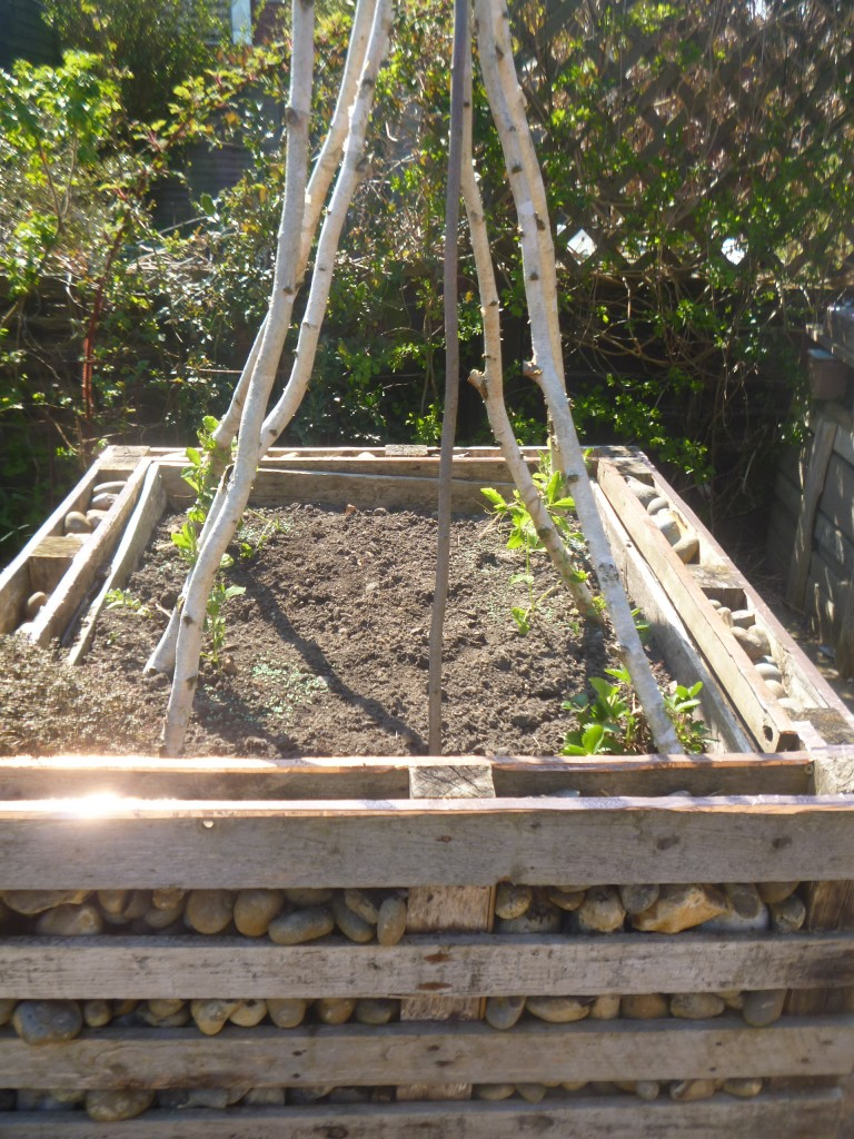 Raised bed with sweet peas