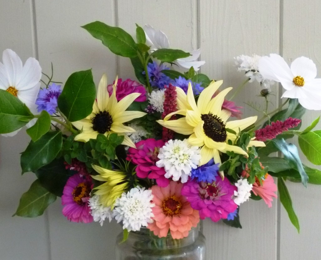 Zinnias, Sunflowers and Scabious