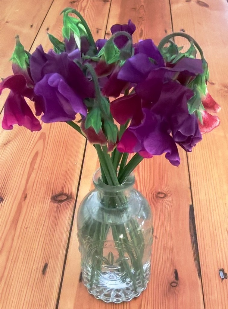 Sweet peas in the cutting garden