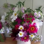 Cosmos and Dahlias2