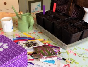Sowing flower seeds
