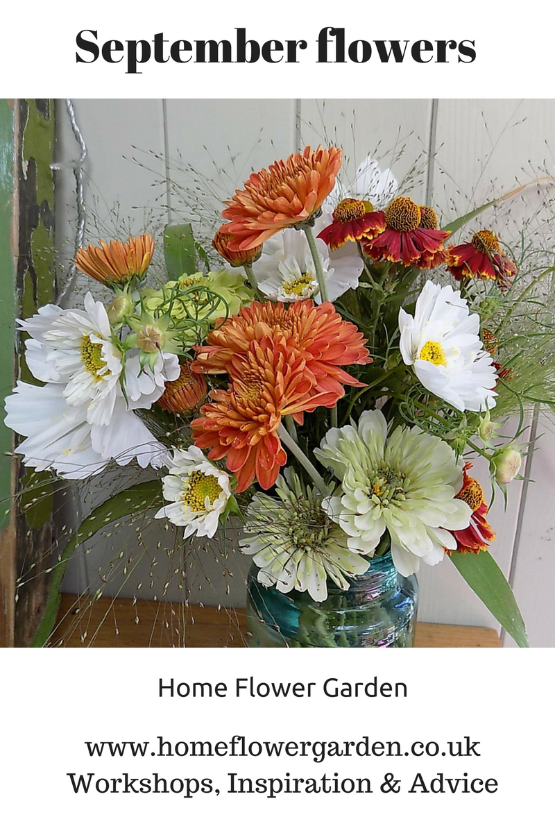 Blog Home Flower Garden: flowers that bloom in september