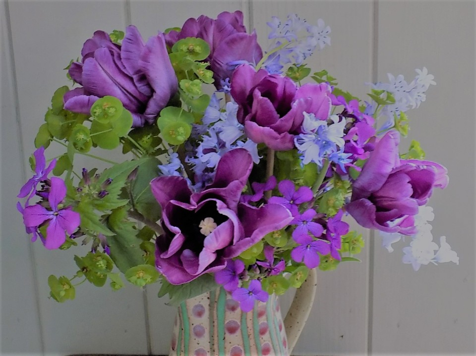 Tulips, Forget-me-nots and Euphorbia