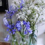 Cow parsley & bluebells