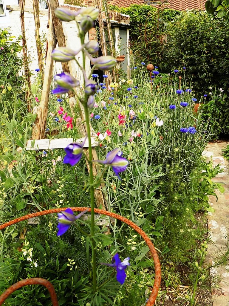 Larkspur, sweetpeas and cornflowers