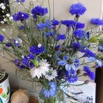 Cornflowers and Nigella