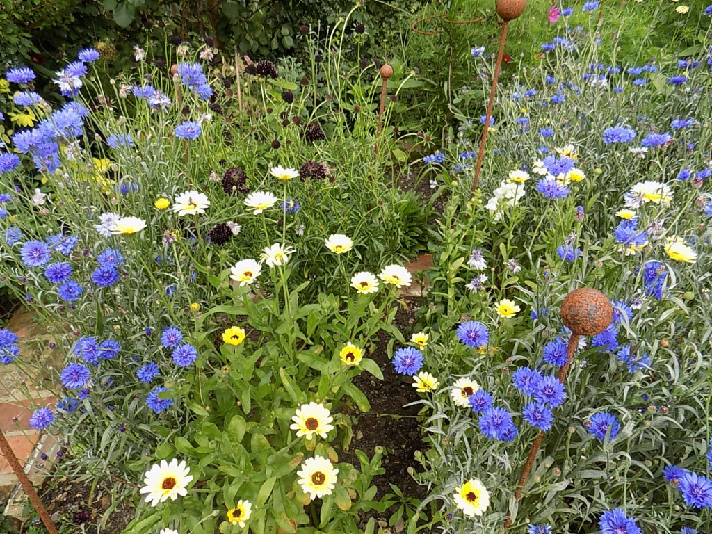 Cornflowers and Marigolds