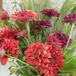 Chrysanthemums & Panicum grass