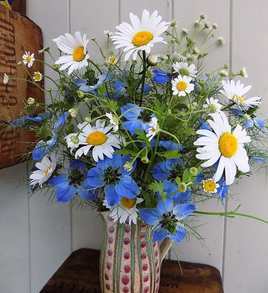 Daisies with love in a mist