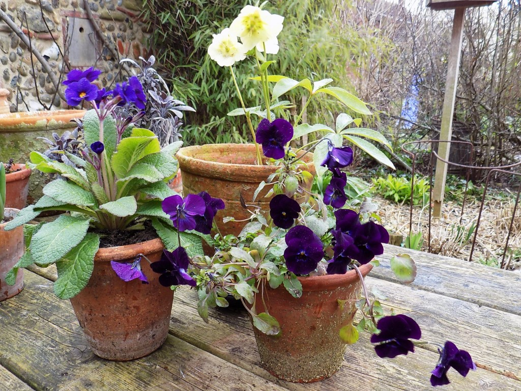 Pots of winter flowers