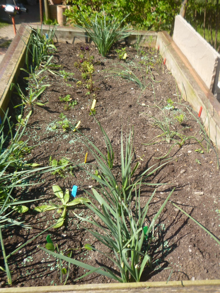 Raised Cutting Bed