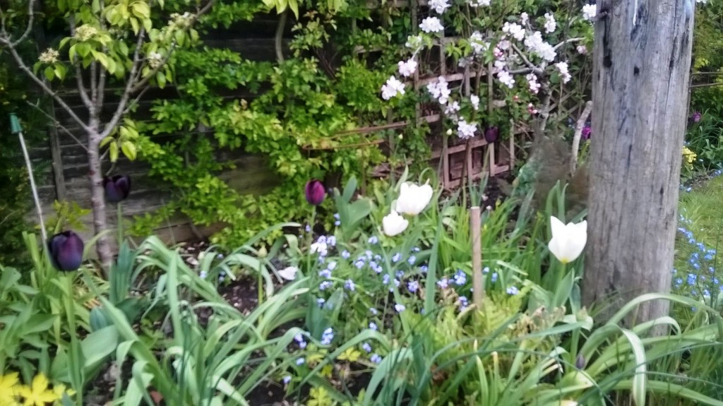 Mixed border in early May