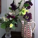 Hellebore pic for hf