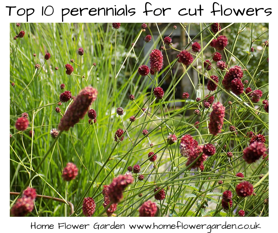 Top 10 perennials for cutting