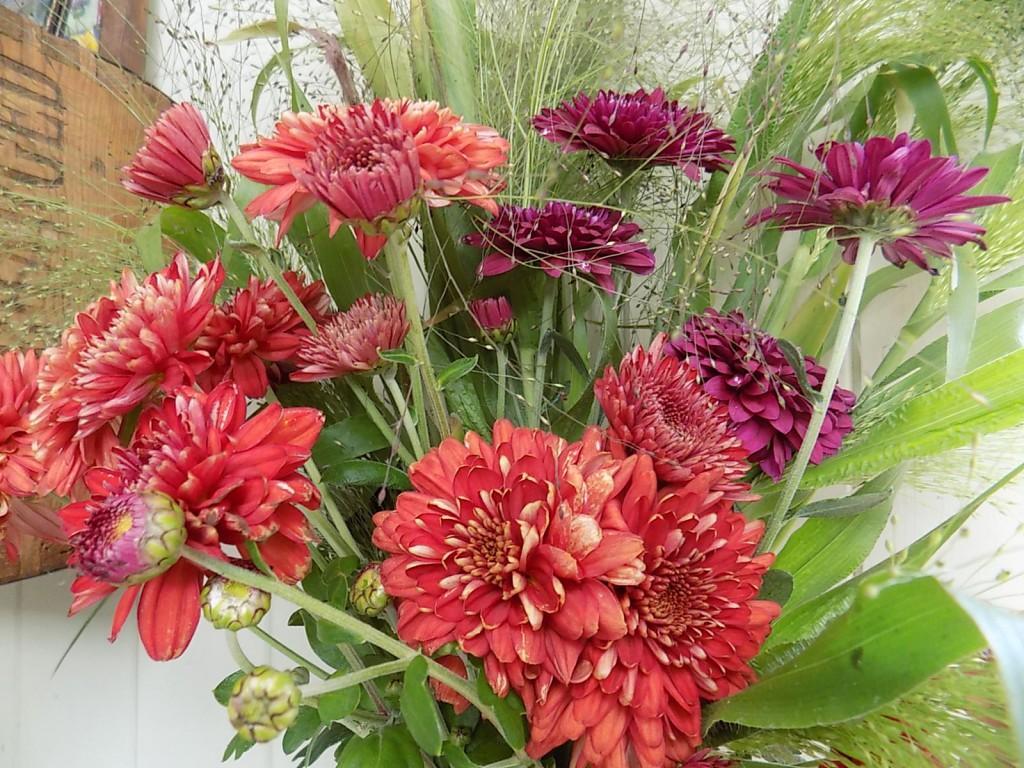 Chrysanthemums and Panicum Grass.