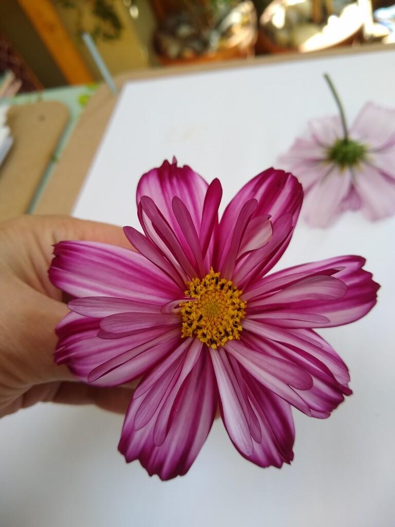 pressed flower advice